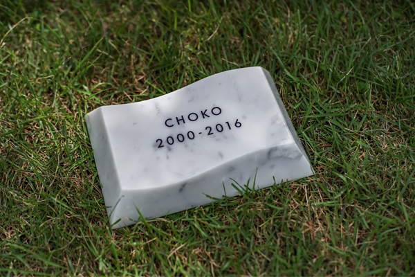oku5001022